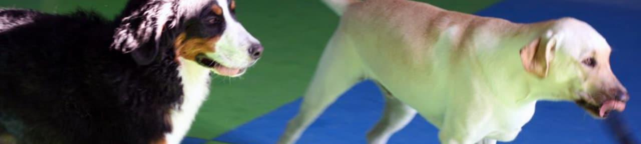 Expert & Loving Dog Training in Las Vegas Valley   A-VIP Pet Resort
