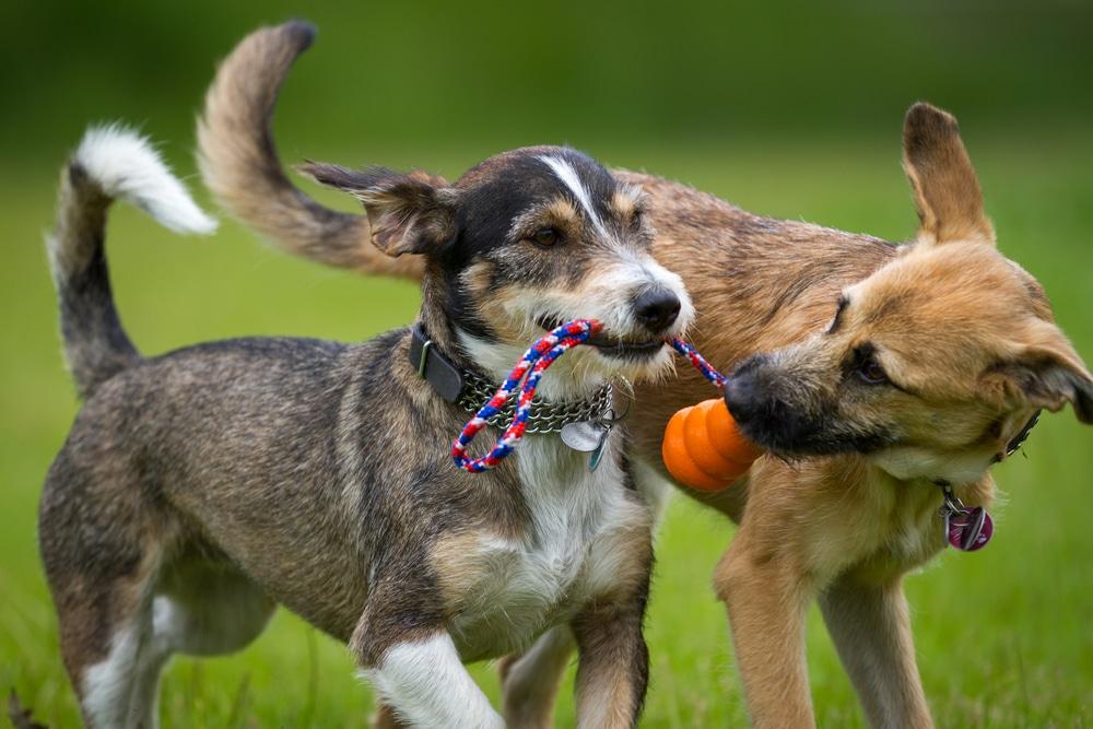 Dog Daycare Near Summerlin