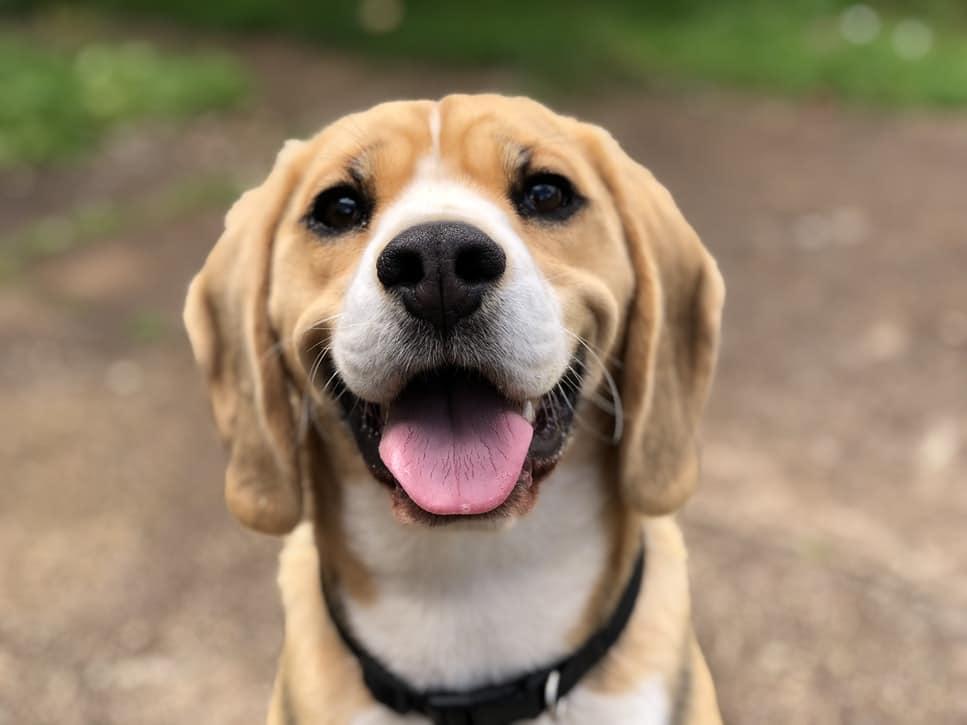 Alleviate Pet Separation Anxiety Near Henderson